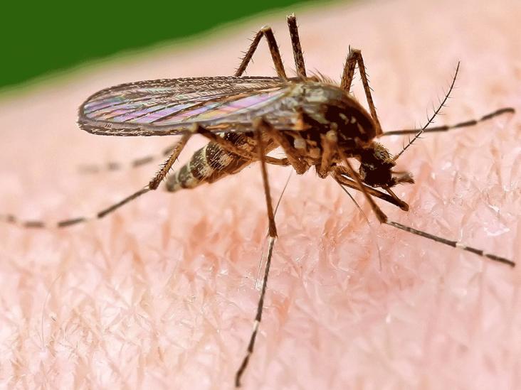 mosquito-zika-virus